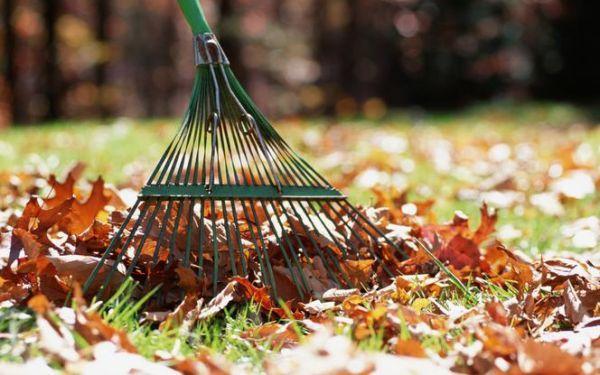 Jakie prace trzeba wykonać w listopadzie w ogrodzie